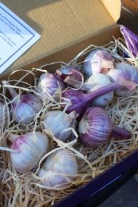 garlicbox